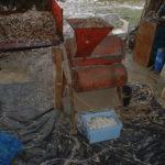 Ecossage du Haricot-Maïs du Béarn