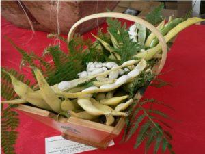 Gousses et grains de Haricots-Maïs du Béarn